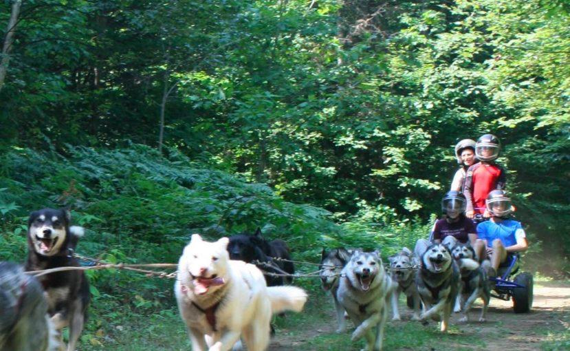 Forfait cani-kart de Kinadapt chez Chalets Lanaudière